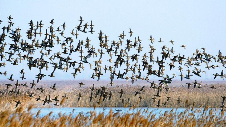 青銅峽鳥島-(2).jpg